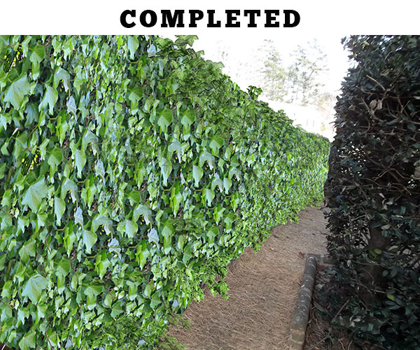 Railroad tie retaining wall repair - construction complete ivy covered wall COMPLETED
